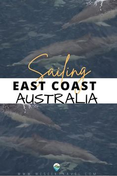 SAILING LOG ORIGINAL JOURNEY: INTRODUCING MALAIKA AND MY FIRST BIG SAILING TRIP Travel Tips, Travel Destinations, Australia Travel Guide, Sailing Trips, Dolphins, Places To Visit, Coast, Journey, Adventure