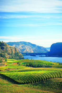 Columbia River & winery in washington state USA