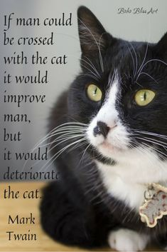If man could be crossed with the cat it would improve man, but it would deteriorate the cat. Post on Cat Quotes. Crazy Cat Lady, Crazy Cats, I Love Cats, Cool Cats, Citations De Mark Twain, Cat Quotes, Animal Quotes, Animal Signs, Mark Twain Quotes