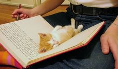Dear Diary, my kitty is the cutest