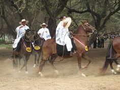 ANTROPOLOGÍA Y ECOLOGÍA UPEL: Pueblos del Perú - Caballo de Paso Peruano
