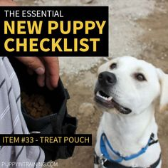 New Puppy Checklist - Item #33 - Treat Pouch - Lab waiting for treats Training Your Puppy, Dog Training Tips, New Puppy Checklist, Puppy Supplies, Puppy Beds, Guide Dog, Puppy Food, Pet Store, Dog Breeds