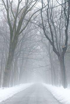Gloomy misty winter trail