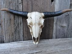 Cow Skull, Faux Taxidermy, Texas Longhorn Skull, Steer Skull, Mounted Bull with Horns, Wall Antlers, Animal Head Wall Mount, Southwestern by JUNKINTIME on Etsy