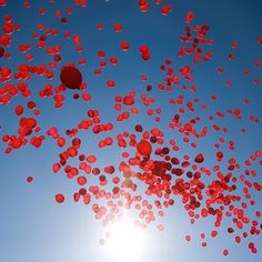 Release of balloons on wedding day