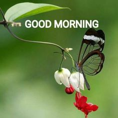 Whatsapp New Images Wallpaper Good Morning Pic Good Morning Monday Images, New Good Night Images, Latest Good Morning Images, Morning Quotes Images, Good Morning Images Download, Morning Greetings Quotes, Good Morning Gif, Good Morning Picture, Good Morning Flowers