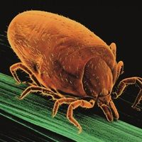 Treating Lyme disease: when will science catch up?
