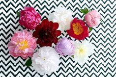 Flower blogger Desiree Castelijn shares flowers to inspire from the south of the Netherlands.