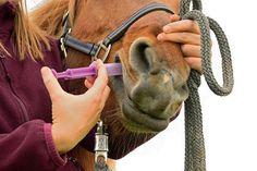 In ersten Tests erwies sich das probiotische Bakterium Bacillus thuringiensis als hochwirksamer Stoff gegen kleine Stronyliden - heute die bedeutendsten und gleichzeitig problematischsten Endoparasiten für das Pferd. © pholidito - Fotolia.com