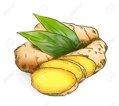 ginger illustration - Google Search