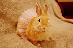 Image via We Heart It https://weheartit.com/entry/134589692/via/11185287 #animal #beautiful #bunny #cute #dance #love #photography #rabbit #vintage