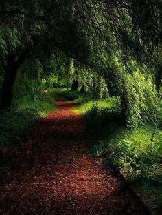 Camino mágico