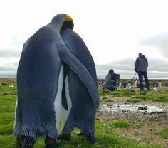 penguins' hug - awwww