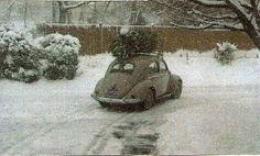 The small Concolor fir LynnSteward.com