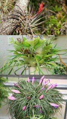 Zen Garden in addition ديكورات حدائق منزلية صغيرة المساحة 2014 ب additionally Watch moreover Diseno Jardin Color as well Watch. on designs for a small garden