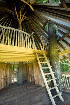 TREE HOUSE – amazing treehouse! Tree House - tropical - garage and shed - philadelphia - Hugh Lofting Timber Framing, Inc.