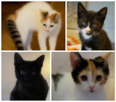 Jane Monica Tvedt - Empire of heart: Cat ARt - Ved salg av kattekunst vil 20 % av inntektene bli donert til Dyrebeskyttelsen Norge Nord Jæren
