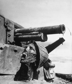 Guadalcanal, 1942 | LIFE Behind the Picture: Skull on a Tank, Guadalcanal, 1942 | LIFE.com