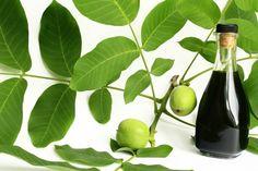 Zölddió likőr - Antal Vali - Diópálinka mézesen: 20 dkg éretlen, puha zöld dió, 1 liter tiszta alkohol, 50 dkg méz, 1 dkg szegfűszeg, 1 dkg fahéj, csillagánizs, vanília, kandírozott narancs héja vagy citromhéj ... A diót gondos tisztítás után apróra vágva tesszük a szeszbe a fűszerekkel, jól lezárva 4 hétig áztatjuk. A mézet 5 dl vízben felforraljuk, ha teljesen kihűlt, a habját leszedtük, az alkoholos dióra öntjük 1 nagy üvegben. Összekeverjük, 2 hétig érleljük, leszűrjük ... Bourbon, Preserves, Vodka, Pear, Plant Leaves, Food And Drink, Canning, Fruit, Drinks