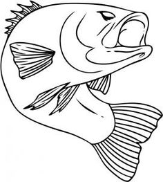 how to draw a bass fish step 6
