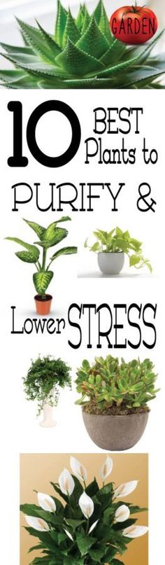 Plants to lower stress and purify, I think I'll put a plant in each room. Th… - House Plants Herb Garden, Garden Plants, Home And Garden, Green Garden, Backyard Plants, Glass Garden, Inside Plants, Cool Plants, Plants For Home