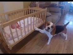 Charlie The Dog Puts Sister To Sleep - (Forget teaching your dog how to fetch. Apparently, you can teach your dog how to babysit…super cute...)