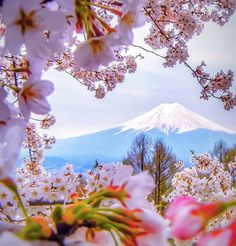 « Spring blossoms in Japan Photo by @capkaieda #landscape #view #love #cute #style #colorful #sunset #life #green #water #white #instagood #hot #blue… »