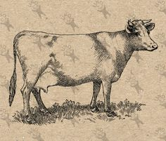 Vintage Retro drawing image Cow Instant Download Digital printable black and white clipart graphic  Fabric Transfer Iron On  etc HQ 300dpi by UnoPrint on Etsy