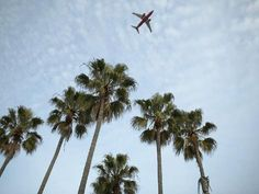 Photographic Print: Plane Flying Over Tropical Palm Trees Poster : Macbook Pro Wallpaper, Computer Wallpaper, Wallpaper Notebook, Laptop Backgrounds, Free Summer, Palm Trees, Plane, Tropical, Instagram Posts
