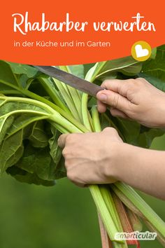 Rhabarber verwerten in der Küche und im Garten Of the rhubarb, only the sticks for cakes or compotes Hydroponic Gardening, Hydroponics, Herb Gardening, Indoor Garden, Outdoor Gardens, Diy Garden, Hydrangea Care, Diy Projects For Beginners, Herbs Indoors