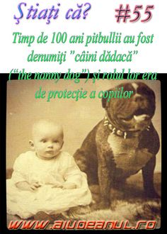 Good To Know, Did You Know, Cultura General, Pitbull, Puerto Rico, Portal, Fun Facts, Teddy Bear, Angel