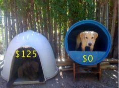 ADVERTEISEMENT diy-dog-house-from-plastic-barrel Hershey would be happier with the barrel. diy-dog-house-from-plastic-barrel Hershey would be happier with the barrel. Cheap Dog Kennels, Diy Dog Kennel, Kennel Ideas, Barrel Dog House, House Dog, Bunker House, Farm House, Dog Igloo, Igloo Dog House