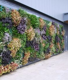 Europe's biggest living wall company Mobilane has created a range of products to 'green up' Britain's urban environments, helping both the private and public sectors to reduce their carbon footprint, promote biodiversity and improve air quality.