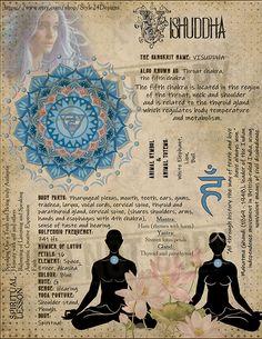 The Fifth Chakra (Visuddha / Throat chakra) Chakra Meditation, Chakra Healing, Meditation Music, Mindfulness Meditation, Vishuddha Chakra, Second Chakra, Throat Chakra, Book Of Shadows, Magick