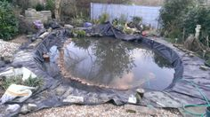 Starting to plant my pond