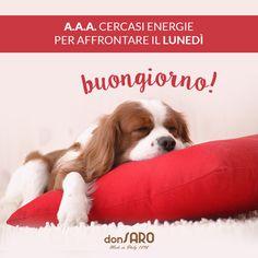 A.A.A. Cercasi energie per affrontare il lunedì - Buongiorno!