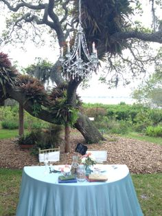 Sweetheart Table with a Chandelier at the Selby Gardens!