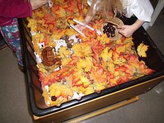 Using tongs to search for nuts in the leaves at the sensory table.