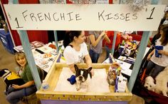 Izzy, a French Buldog, works a kissing booth to generate money for Short Mugs Rescue Squad