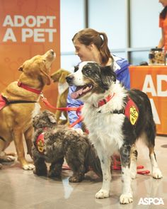 "For the seventh year in a row, the ASPCA was selected as one of four national charities to participate in the Subaru ""Share the Love"" event, which ran from November 20, 2014, to January 2, 2015. Learn more about how this special event helped over 3,000 animals! http://www.aspca.org/blog/the-results-are-in-subaru-shares-the-love-in-a-big-way"