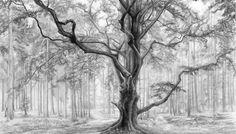 En Güzel Karakalem Resimleri | Ağaç