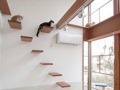 須磨のネコが暮らす住宅