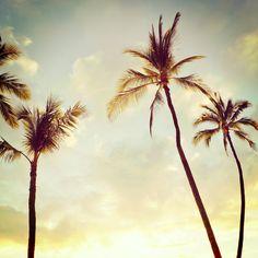 Hawaii Palms Canvas Print