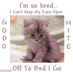 I'm so tired - Good Night cute cat animated dog pets gif good night good night greeting Good Night Cat, Good Night Sister, Good Night Funny, Good Night Beautiful, Good Night Sweet Dreams, Good Night Image, Good Night Quotes, Beautiful Birds, Good Night Greetings
