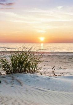 sunset plage The cool, softness of the sand can almost be felt in this sunset photo at the beach. Beach Walk, Ocean Beach, Ocean Waves, Summer Beach, Nature Beach, Photo Images, I Love The Beach, Beach Quotes, Ocean Quotes