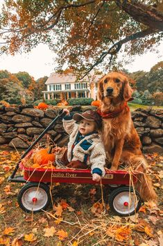 It's fall here with Flying with Air. When we get to play with leaves and ride in a red wagon with a golden retriever Cute Puppies, Cute Dogs, Dogs And Puppies, Cute Babies, Doggies, Animals And Pets, Baby Animals, Cute Animals, Fall Pictures