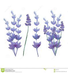 Vector Watercolor Lavender Delicate Bunch Stock Vector - Image: 48321911