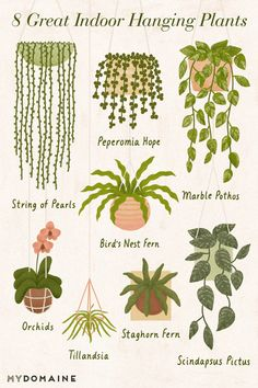 Die 10 besten Zimmerpflanzen, um Ihr Zuhause in einen Dschungel zu verwandeln The 10 best houseplants to turn your home into a jungle the 10 best indoor hanging plants to turn your home into a jungle Best Indoor Hanging Plants, Indoor Cactus, Indoor Plant Wall, Indoor Plants Low Light, Plantas Indoor, Design Jardin, Garden Design, Plant Design, Indoor Gardening