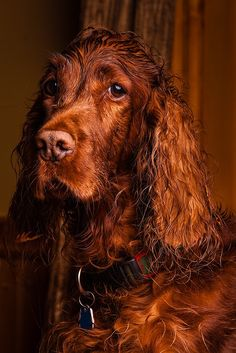 Wet Dog - My dog was out chasing squirrels in the cedar trees this morning :D