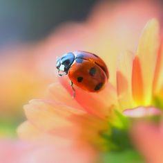 http://daily-colours.blogspot.com/